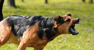 التوعية النوعية - داعش تدرب الكلاب