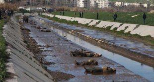 الثورة السورية - مجزرو نهر قويق